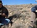 Artemisia bigelovii — Matt Lavin 003.jpg