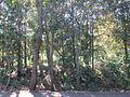Ashgrove enoggera creek res 1.jpg