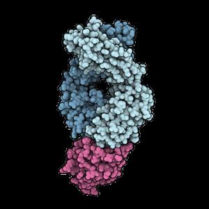 Atezolizumab PD-L1 5X8L.png