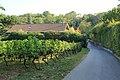 Au cœur du vignoble de Tannay.jpg