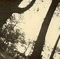 Auschwitz Resistance 282a.jpg