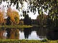 Autumn and yellow birch and still river Pavlovsk.jpg