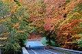 Autumn at Minnowburn near Belfast (1) - geograph.org.uk - 599586.jpg