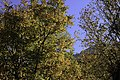 Autumn in Ourika Valley (11278038005).jpg