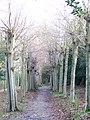 Avenue to West Clandon Church - geograph.org.uk - 1085789.jpg