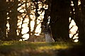 Awoken Deer (Unsplash).jpg