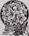 Azalea mollis 1901.jpg