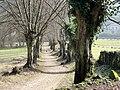 Béthisy-Saint-Pierre (60), allée près du chemin de la Grille.jpg