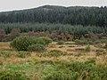 Back Hill of Glenlee, Clatteringshaws Forest - geograph.org.uk - 262786.jpg