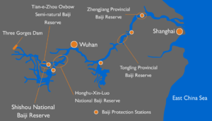 Baiji - Conservation efforts of the baiji along the Yangtze River