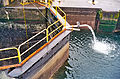 Ballard Locks Cleaning 2012-03-18 02.jpg