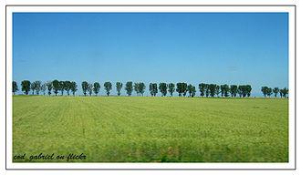 Bărăgan Plain - Field
