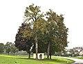 Baumgruppe bei Kapelle in Eberschwang.jpg