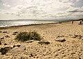 Beach below Car Park, Hengistbury Head - geograph.org.uk - 1444651.jpg