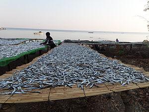 Economy of Malawi - Dried fish on Likoma Island