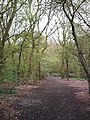 Beckney Wood - Footpath near S.W. Corner - geograph.org.uk - 151695.jpg