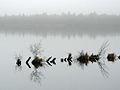 Bederkesaer See beim Naturschutzgebiet Holzurburg.jpg