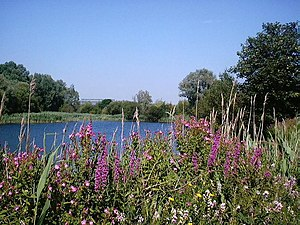 Bedfont Lakes Country Park - Bedfont Lakes Country Park