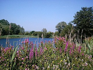Bedfont Lakes Country Park