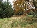 Beech Trees - geograph.org.uk - 1033887.jpg