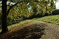 Beech tree, Blenheim - geograph.org.uk - 1016386.jpg