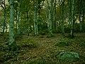 Beechs - panoramio.jpg