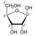 Beta-D-Ribofuranose Numbered.png