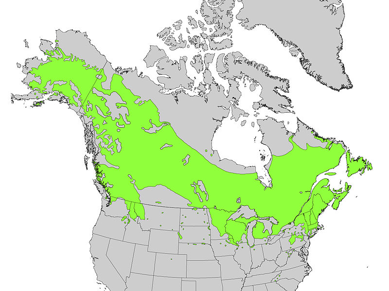 File:Betula papyrifera range map.jpg