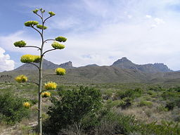 Big Bend National Park PB112611.jpg