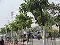 Big trees planted.JPG