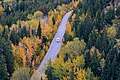 Bird's-eye view of an autumn road (Unsplash).jpg