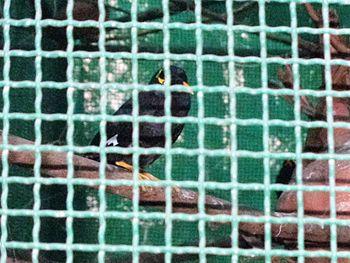 Bird In Lucknow Zoo.jpg