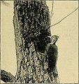 Bird lore (1921) (20195691520).jpg