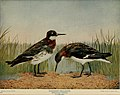 Birds and nature (1902) (14752181295).jpg