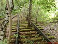 Birken quetschen sich durch Bahnschwellen - panoramio.jpg