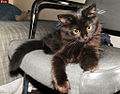 Black cat on a chair.jpg