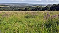 Blackcap's meadow above Ashcombe Bottom East.jpg