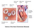 Blausen 0460 Heart VentriclesRelaxed.png