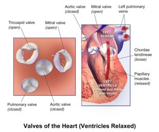 Patologia cardiovascolare