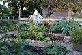 Blumengärten Hirschstetten Wien 2014 Gemüse-Salatgarten a.jpg