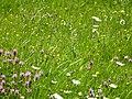 Blumenwiese Mai 2012 - panoramio.jpg