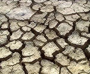 Etosha pan - Desiccated soil of the Etosha pan