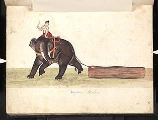 Sin-mya. Elephant