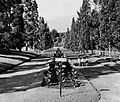 Bogor Botanical Gardens, Know Indonesia... Know Your Friend, p4.jpg