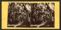 Bonaventure Cemetery near Savannah, from Robert N. Dennis collection of stereoscopic views.png