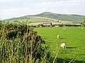 Borders farmland - geograph.org.uk - 237800.jpg