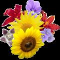 Bosje bloemen.png