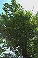 BotGardenFomin DSC 0136-1.jpg