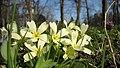 Botanic Garden - Cluj-Napoca (2371215663).jpg