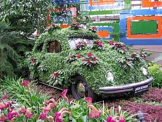 Montreal Botanical Garden - Flower covered Beetle in the Montreal Botanical Garden greenhouse, 2005